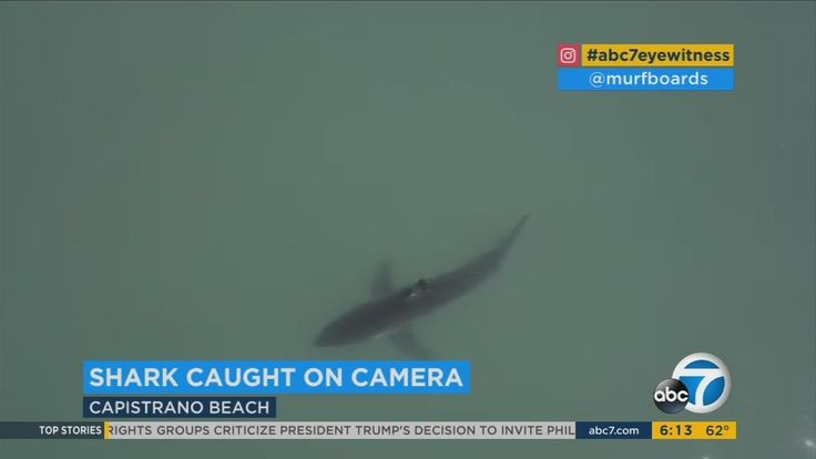 Large shark filmed by drone swimming off Capistrano Beach