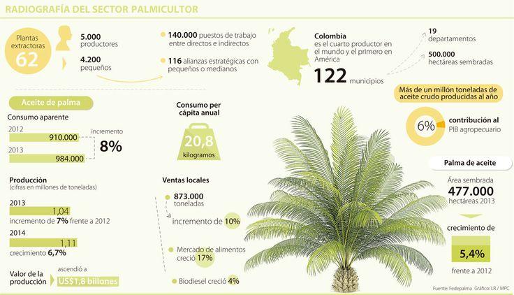 Palma de Aceite, potencial de energía limpia