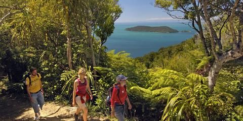 It takes four to five days to hike the entire Queen Charlotte Track, dotted with sandy beaches.