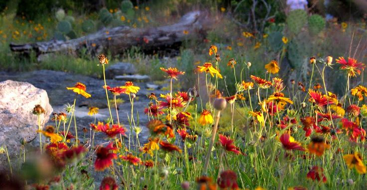 """qiang-huang, a daily painter: """"Wild flowers at Wenmohs Ranch"""""""