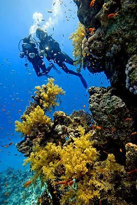 Key Largo, Florida Keys. Diving and beautiful coral reefs gallore. A real photographer's delight and paradise. What a place!