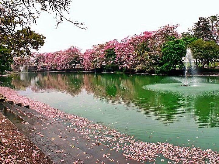 En la ciudad de Villahermosa, y conocido como el símbolo del lugar, se encuentra la laguna de las ilusiones.Esta laguna ocupaba anteriormente más de 500 hectáreas, pero, y debido a la urbanización, los márgenes de este cuerpo de agua se han reducido hasta llegar a un poco más de 220 hectáreas. Es, además,el hábitat de …