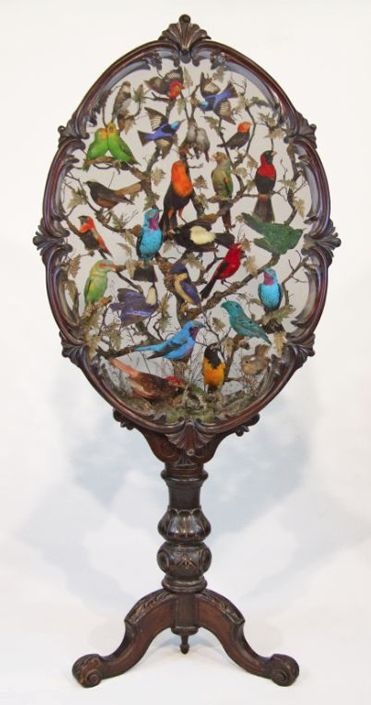 Victorian walnut oval shadow box containing taxidermy birds, on a tripod stand, marked for Henry Ward. Sold for 8,000 GBP in Bristol, England, Nov. 2011.