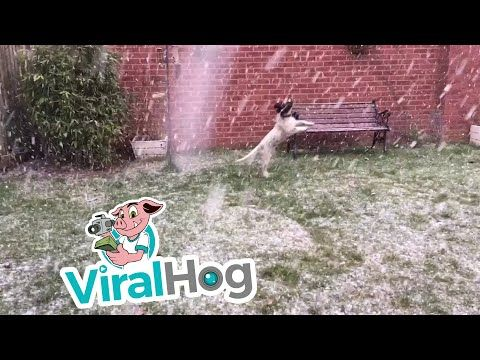 Puppy Spaniel Discovers Snow Viralhog Youtube