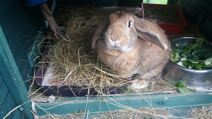 This is my aunty cute rabbit called Fergus.