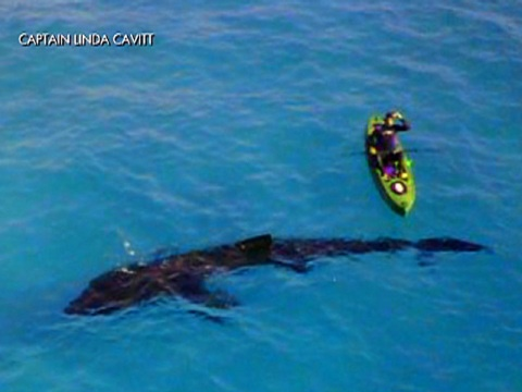A Long Basking Shark Was Spotted Off The Coast Of Panama City Beach Florida Id Wet My Pants If I In Little Boat