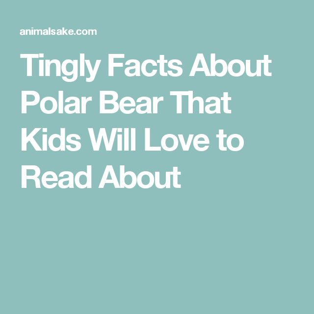 Tingly Facts About Polar Bear That Kids Will Love to Read About