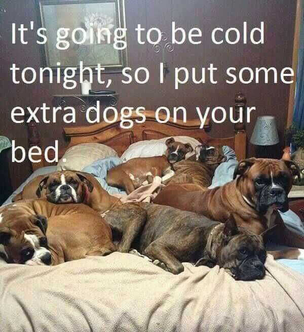 Do Dogs Like To Sleep In The Cold