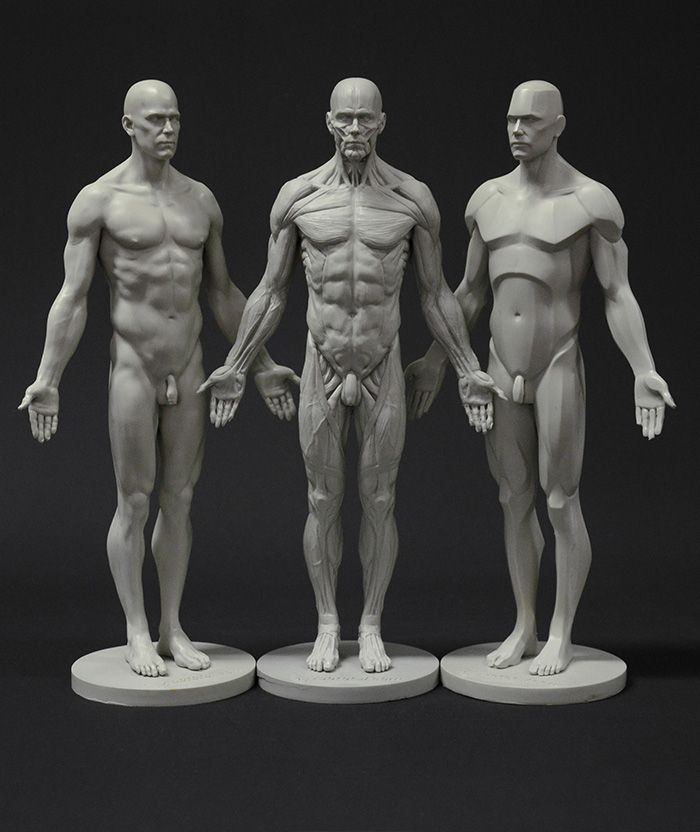 Sculpt, draw and understand the fundamental shapes and volumes that build up the male body with 3dtotal's male planar, skin and écorché figure bundle...