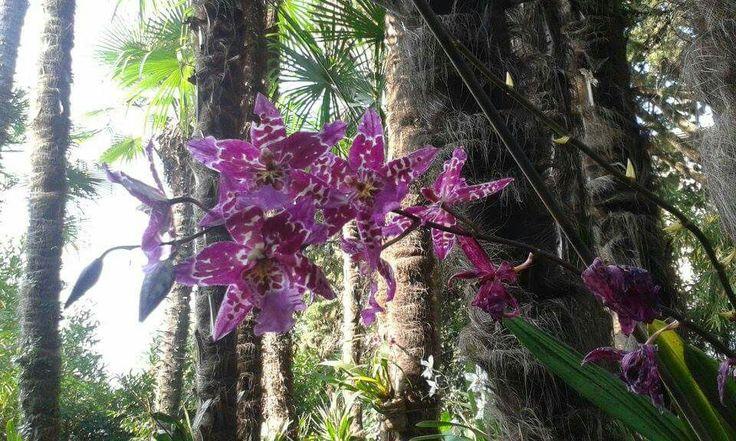 Il linguaggio segreto dei fiori _ orchidea viola