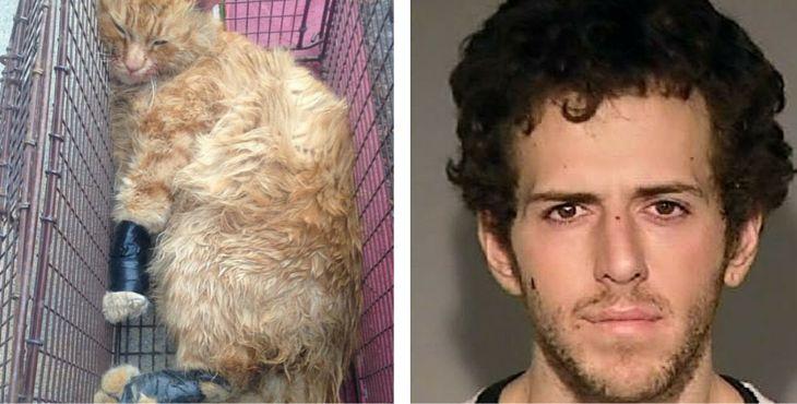 En fouillant son sac, les policiers sont tombés sur un chat agonisant et ligoté avec du scotch