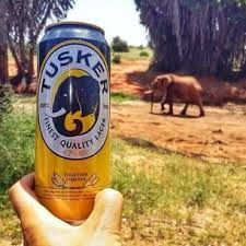 Tusker in the National Park!