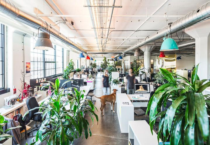 I creativi dei VIP lavorano in una vecchia fabbrica di Montreal trasformata da MU Architecture in uno spazio di lavoro informale, dove girano con lo skate e giocano con il proprio cane