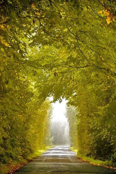 Ireland: Ireland, Nature, Beautiful, Trees, Tree Tunnel, Places, Walk