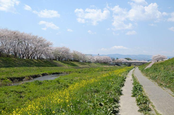 新川河川敷 2014.04 (Iwaki-City, Fukushima,JAPAN)