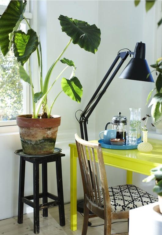 Bo med planter Dorthe Kvist 10