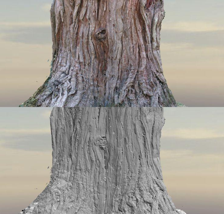ArtStation - Trees 3D scanning, Romain Rouffet