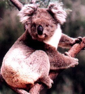 Ettamogha Sanctuary Albury Australia, NSW