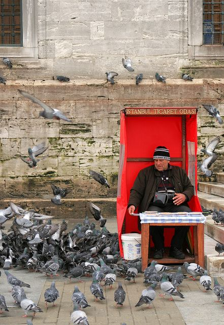The Pigeon Man in Istanbul, Turkey