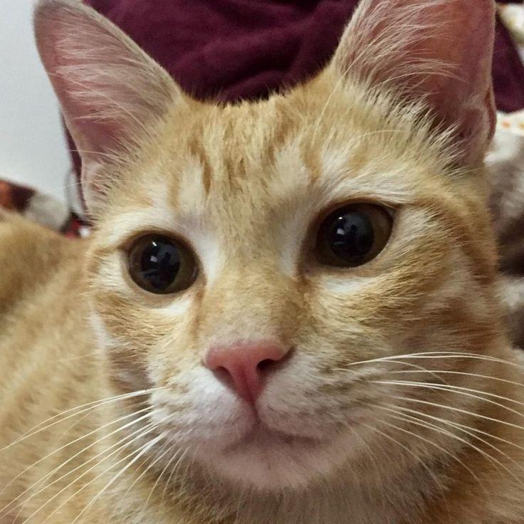 Маленький рыжий котенок был найден под автомобилем и принят в семью