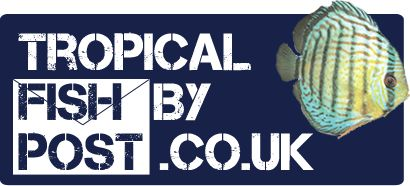 Tropical Fish By Post.co.uk : The UK's No. 1 Online Tropical Fish Store