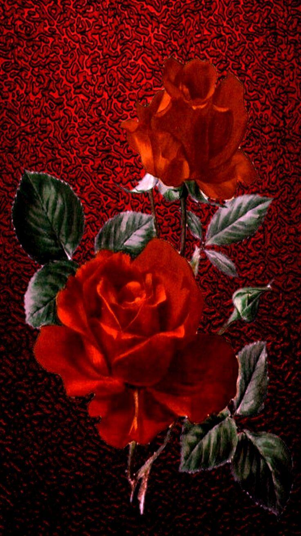 iPhone vertical wallpaper red roses vintage print on fed