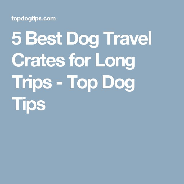 5 Best Dog Travel Crates for Long Trips - Top Dog Tips