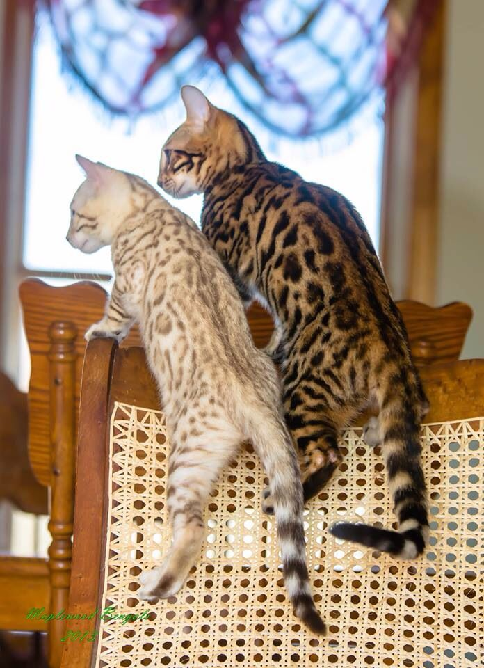 """"""" Non-violence is alright az long as it works.""""   CREAM BENGAL:  """" I don'ts thinks dat is gonna work."""""""