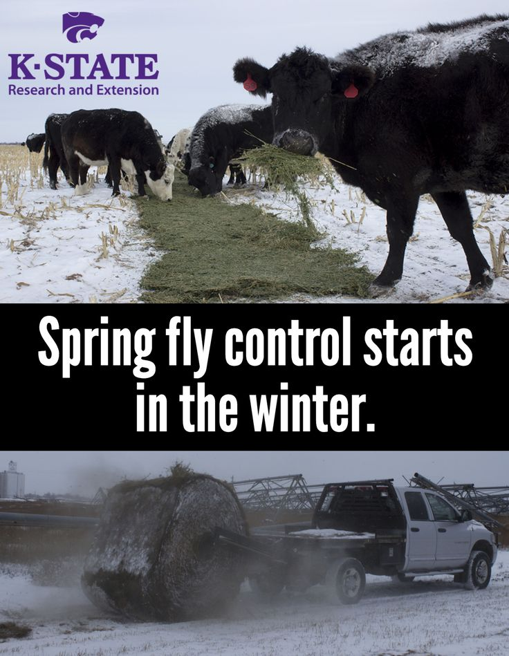 Make sure you're prepared ahead of time #cattle #ag