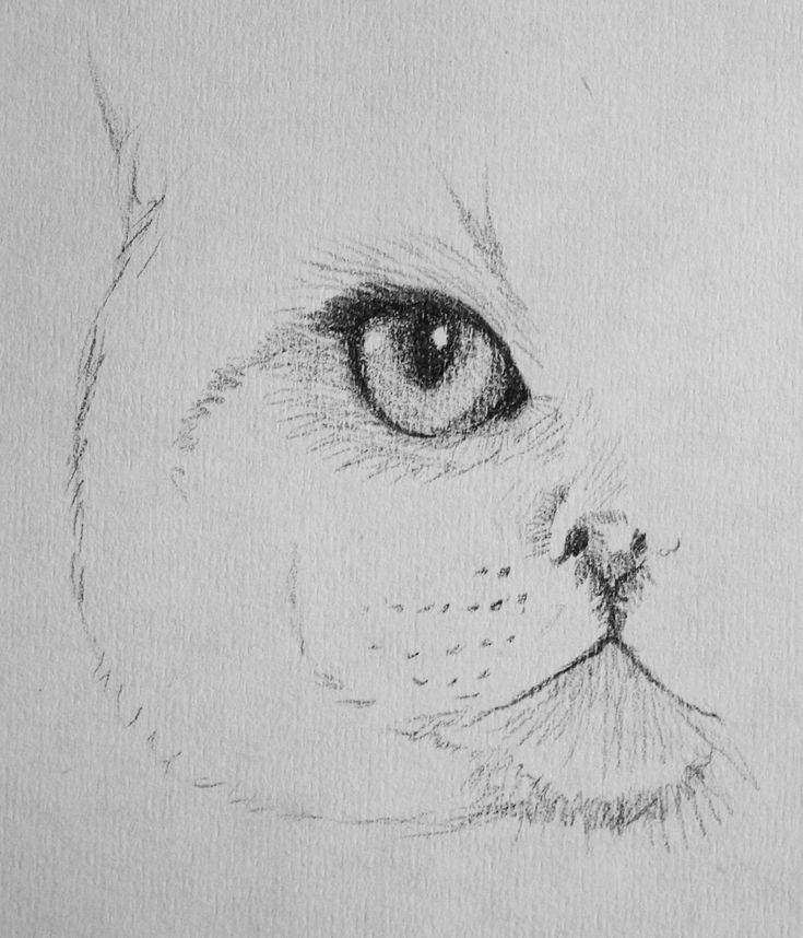 DRAWING OF ONE CAT EYE In 2020