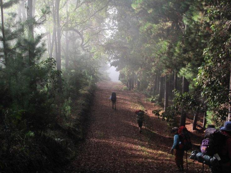 Walkers in Pine Forest near Blackwood