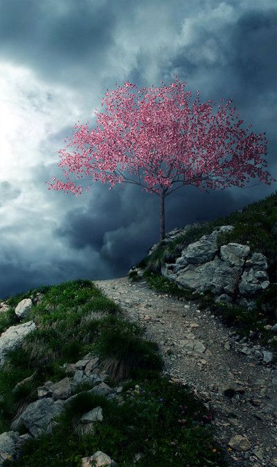 Beautiful!: Rose, Paths, Pink Trees, Color, Beautiful, Blossoms Trees, Pathways, Storms Cloud, The Dark