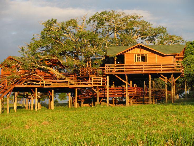 450 m2 construidos sobre pilares de madeira roliça ao redor de 2 paineiras rosas. 450 m2 built over pillars around 2 pink cotton trees. Built by Casa na Árvore Ltda - 2010.