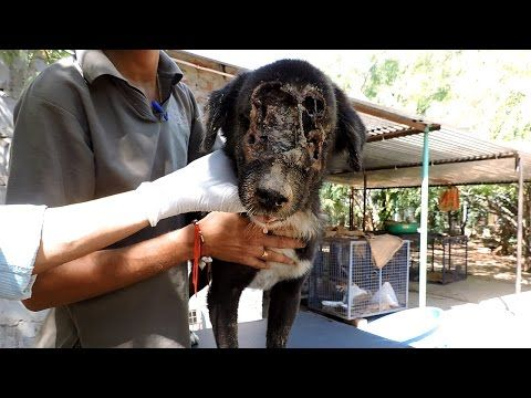 Amazing rescue story