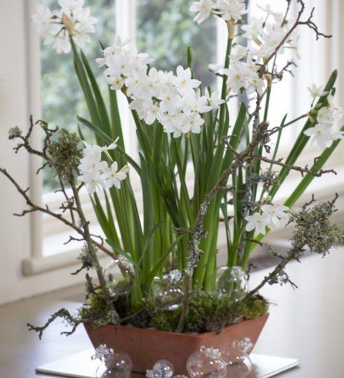 10 Bulb Garden Design Ideas: 1000+ Ideas About Narcissus Bulbs On Pinterest