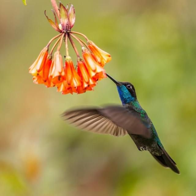 How To Attract Hummingbirds: 44 PROVEN Tips