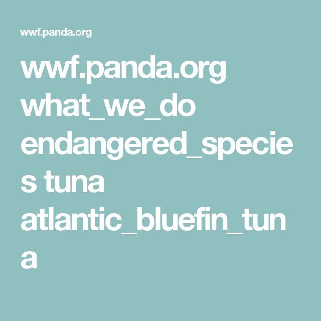 wwf.panda.org what_we_do endangered_species tuna atlantic_bluefin_tuna