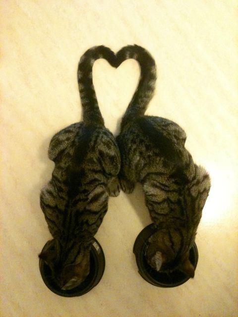 One #Love, Two Kitties.