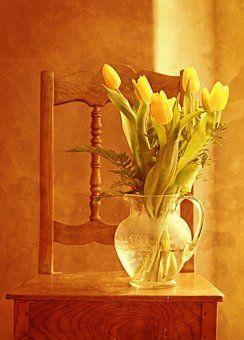 Tulipán Kytice, Tulipány, Kytice