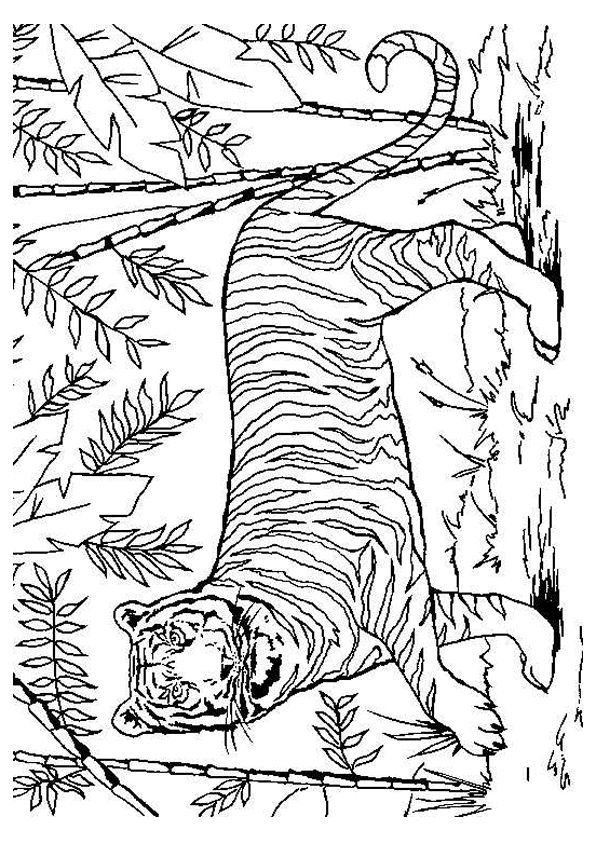 25 best ideas about coloriage tigre on pinterest - Animal dessin ...