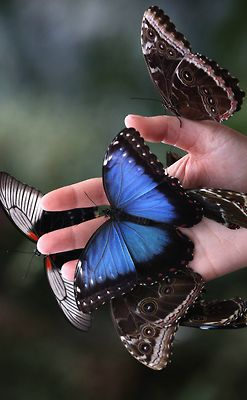 Fairy Tale Fashion ♀ Bokeh Photography Hand with Beauitful Butterflies. Specially the BLUE...