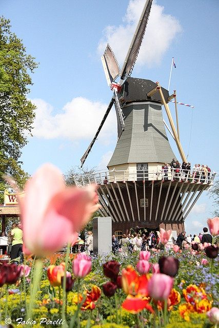 """Windmill among the tulips ""   ~  Keukenhof Garden.   Amsterdam, Holland.   photo by Fabio Perelli via Flickr"