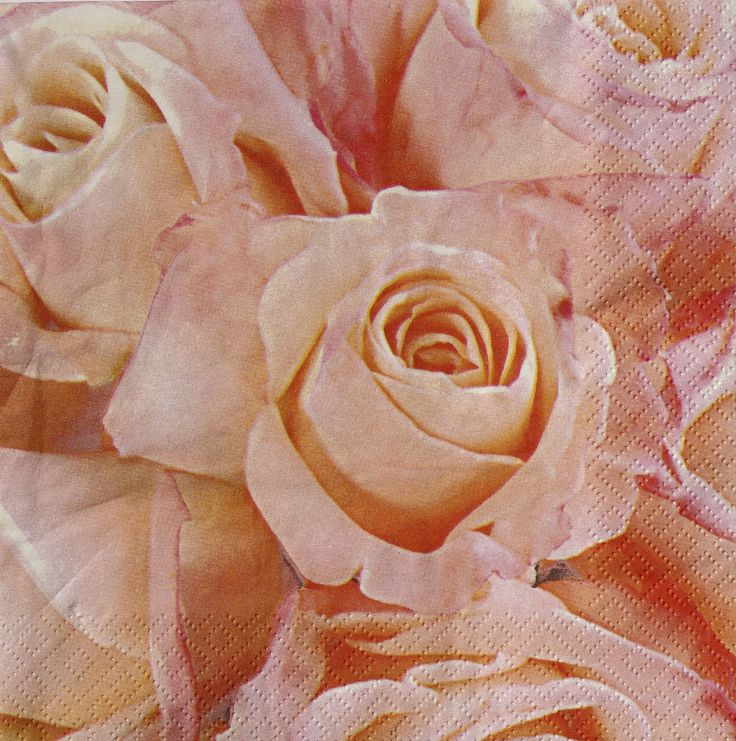 Serviette en papier parterre de roses couleur rose saumon roses for Parterre de roses photos