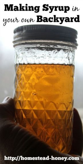 Did you know you can make syrup from trees growing in your own backyard?  Birches, walnuts, many kinds of maples and more backyard trees can be tapped to make delicious syrup!  | Homestead Honey