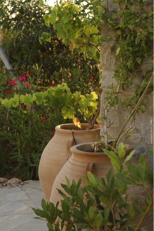 Landscaping With Climbing Plants : Best greek garden ideas only on