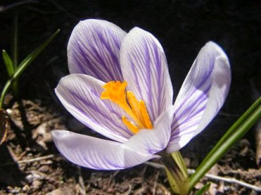 The Priciest Substances on the Planet: Saffron Cost: $11.13 per gram or $5,040 per pound What you do with it: Saffron is a flowering plant that can be used in natural remedies for everything from depression to menstrual cycles.