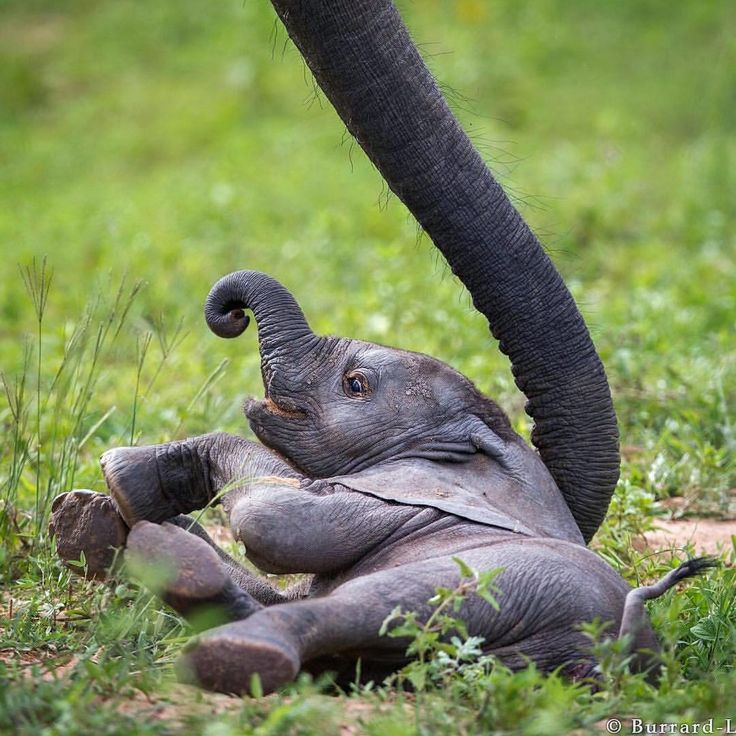 I can't resist a baby elephant