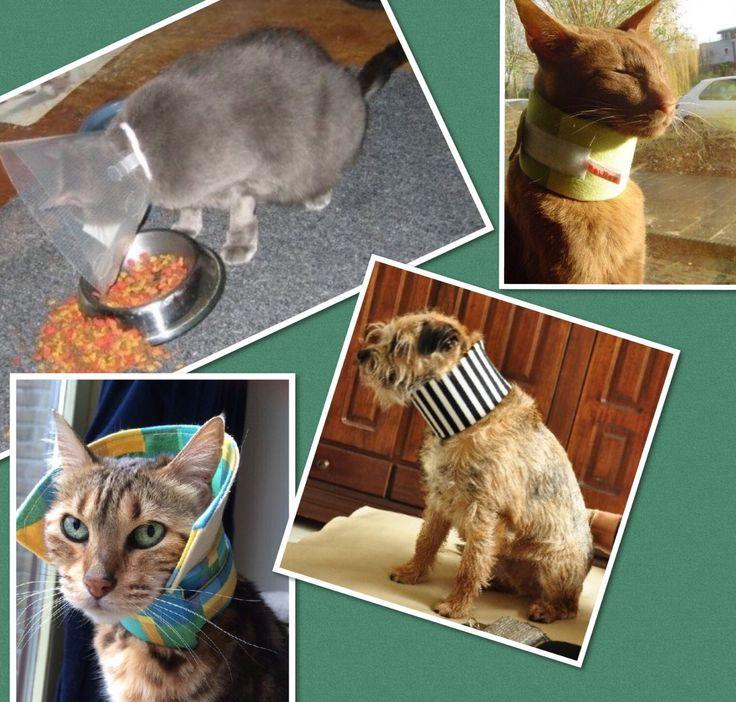 Kat- en hondvriendelijke oplossing tegen bijten en krabben. Cats dogs, kat hond.