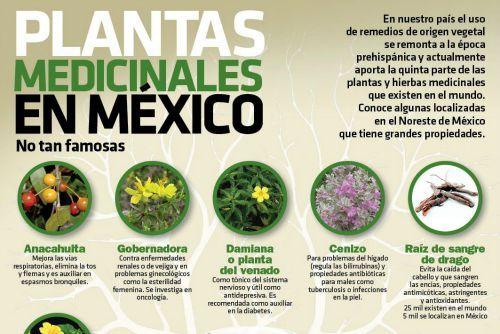 Infografia 10 plantas medicinales en m xico no tan for Planta decorativa con propiedades medicinales crucigrama