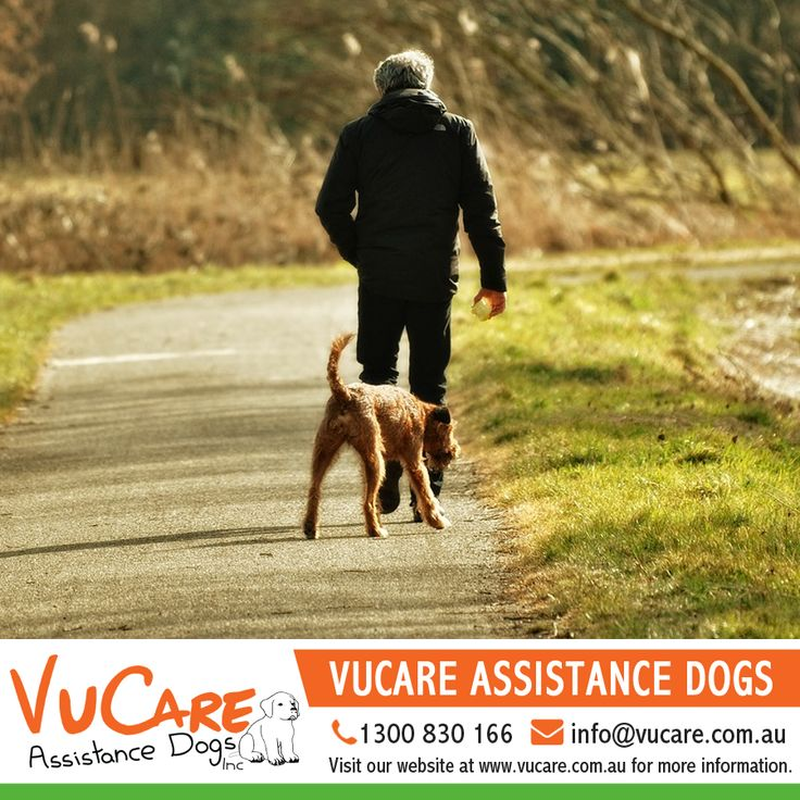 For more information call us on 1300 830 166 or email us at info@vucare.com.au. Visit VuCare Assistance Dogs website at http://vucare.com.au/  #Dogs #Pets #VuCare #DogsAssistance #Dog #DogOnDuty #DogCare #ServiceDogs #DogsForDisabilities #AssistanceDogs #DogTraining #AssistanceDogProgram